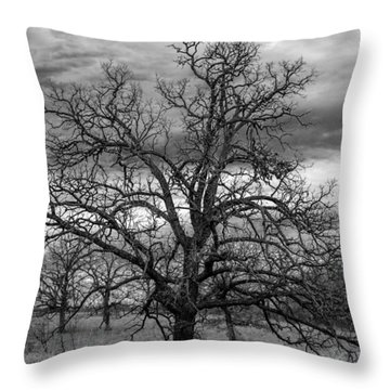 Throw Pillow featuring the photograph Gnarly Tree by Sennie Pierson