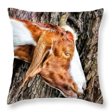 Throw Pillow featuring the photograph Goat 3 by Dawn Eshelman