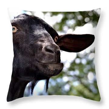 Goat Throw Pillow by Tara Potts
