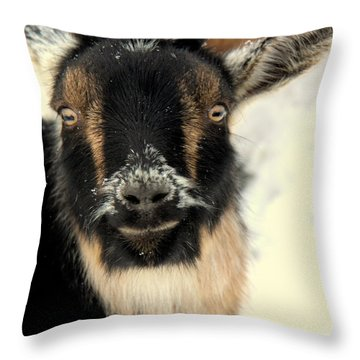 Goatstache Throw Pillow by Kathy Bassett