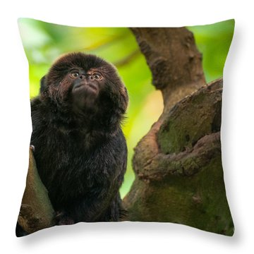 Throw Pillow featuring the photograph Goeldi's Callimico by Bianca Nadeau