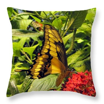 Gold Giant Swallowtail Throw Pillow