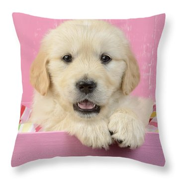 Gold Retriever Pink Background Throw Pillow by Greg Cuddiford