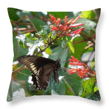 Throw Pillow featuring the photograph Gold Rim Swallowtail by Ron Davidson