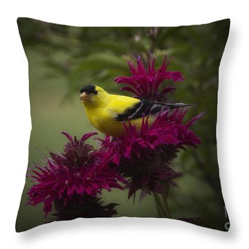 Golden Bee Balm Throw Pillow