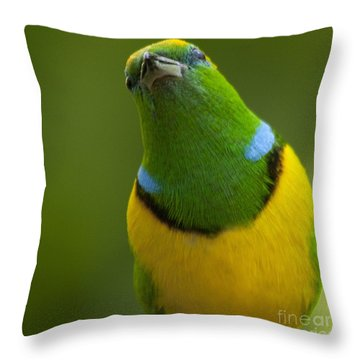 Golden-browed Chlorophonia - Chlorophonia Callophrys Throw Pillow by Heiko Koehrer-Wagner