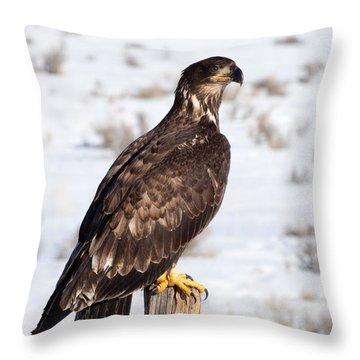 Golden Eagle On Fencepost Throw Pillow