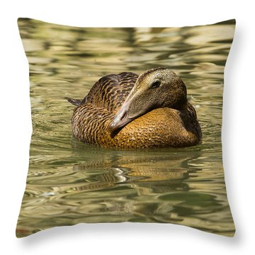 Golden Eider Throw Pillow