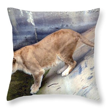 Golden Fur Lioness Throw Pillow