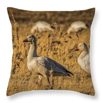 Throw Pillow featuring the photograph Golden Geese by Mitch Shindelbower