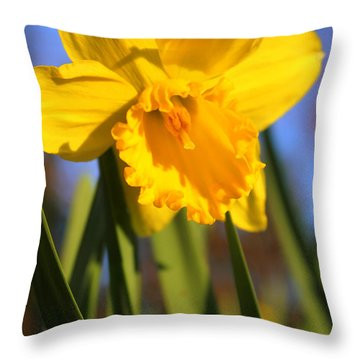 Golden Glory Daffodil Throw Pillow