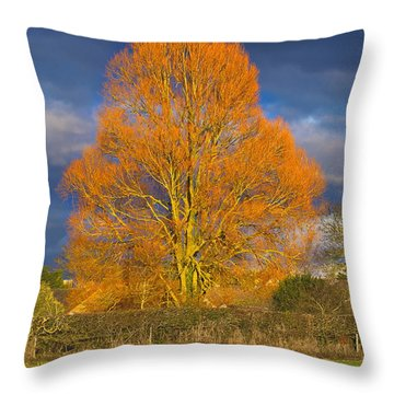 Golden Glow - Sunlit Tree Throw Pillow