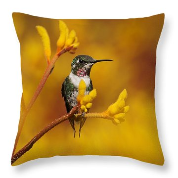 Throw Pillow featuring the photograph Golden Glow by Blair Wainman