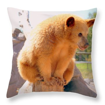 Golden Grizzly Cub Throw Pillow