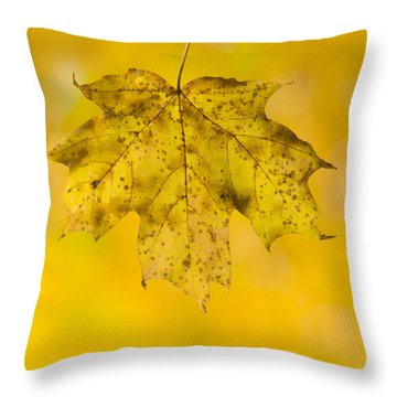 Throw Pillow featuring the photograph Golden Maple Leaf by Sebastian Musial