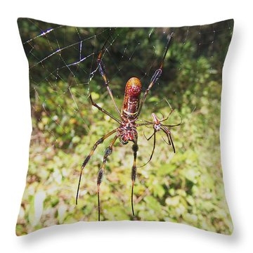 Golden Orb Weaver Spider Throw Pillow