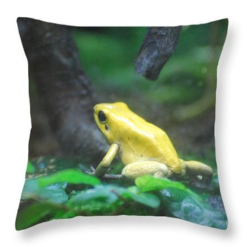 Golden Poison Frog Throw Pillow by DejaVu Designs