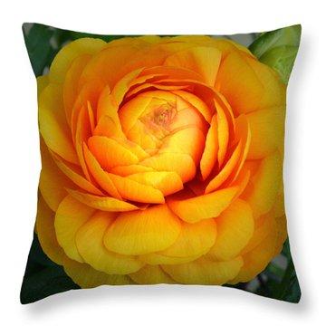 Golden Ranunculus. Throw Pillow by Terence Davis