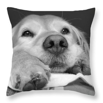 Golden Retriever Dog I See You Throw Pillow