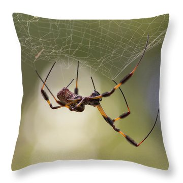 Golden-silk Spider Throw Pillow