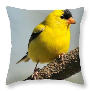 Goldfinch 306 Throw Pillow