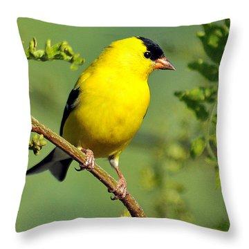 Goldfinch 328 Throw Pillow