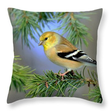 Goldfinch In A Fir Tree Throw Pillow