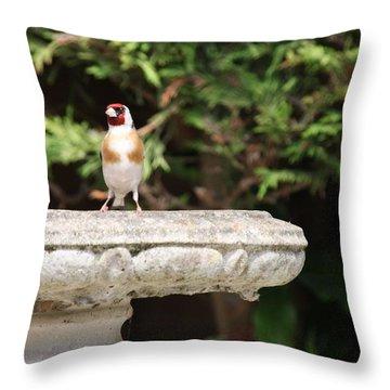 Goldfinch On Birdbath Throw Pillow by Gordon Auld
