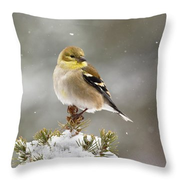 Goldfinch In The Snow Throw Pillow