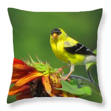 Goldfinch Pose Throw Pillow by Dianne Cowen