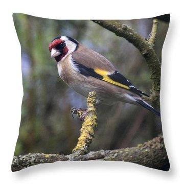 Goldfinch Throw Pillow by Richard Thomas