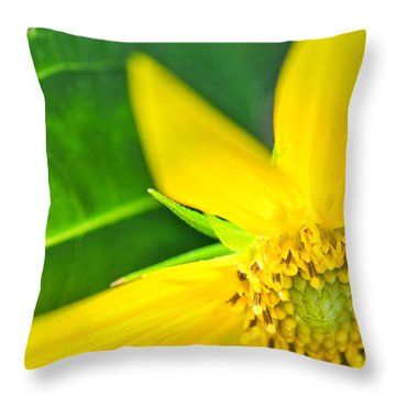 Throw Pillow featuring the photograph Good Cheer by David Perry Lawrence