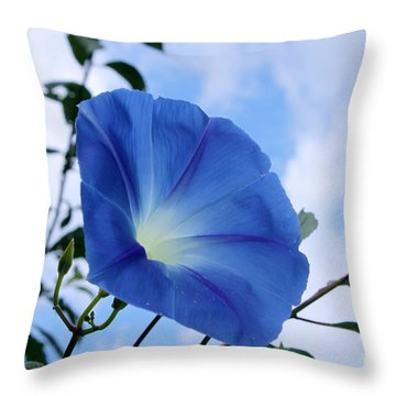 Good Morning Glory Throw Pillow by Cathy  Beharriell