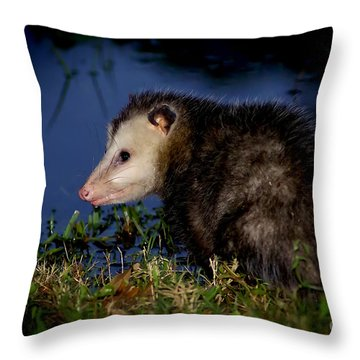Throw Pillow featuring the photograph Good Night Possum by Olga Hamilton