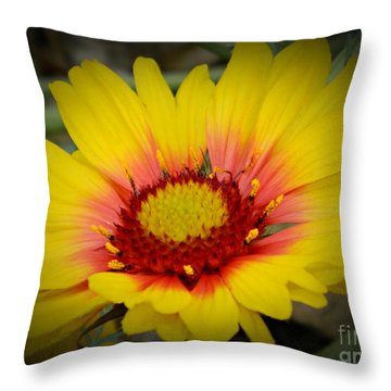 Gorgeous Daisy Throw Pillow by Chalet Roome-Rigdon
