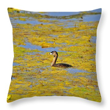 Gorgeous Grebe Throw Pillow by Al Powell Photography USA
