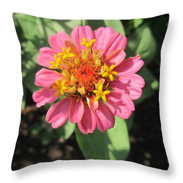 Throw Pillow featuring the photograph Gorgeous Pink by Tina M Wenger