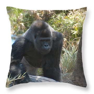 Throw Pillow featuring the photograph Gorilla 01 by Donald Williams