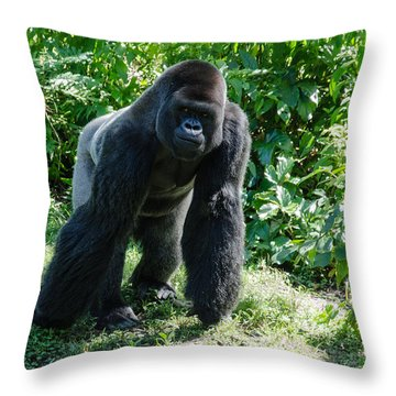 Gorilla In The Midst Throw Pillow