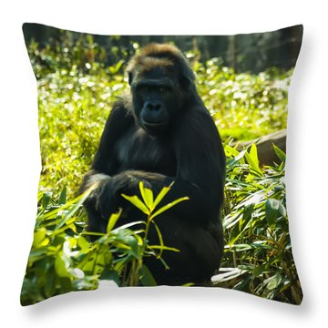 Gorilla Sitting On A Stump Throw Pillow