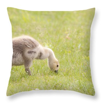 Throw Pillow featuring the photograph Gosling by Jeannette Hunt