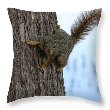 Throw Pillow featuring the photograph Lookin' For Nuts by Christy Pooschke