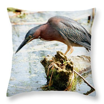 Got My Eye On Something Throw Pillow by Janice Adomeit