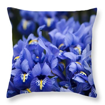 Got The Iris Blues Throw Pillow by Anne Gilbert