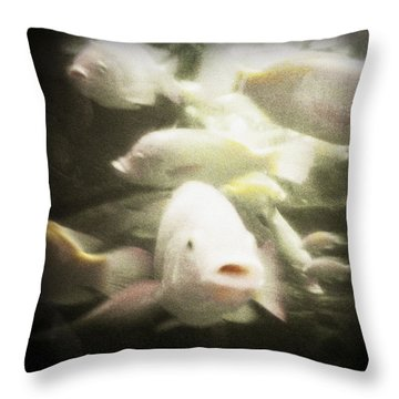 Throw Pillow featuring the photograph Gouramis by Bradley R Youngberg
