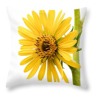 Graceful Beauty II Throw Pillow