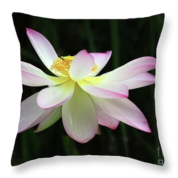 Graceful Lotus Throw Pillow