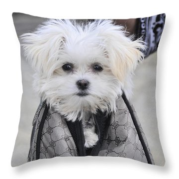 Gracie Hangin' Out Throw Pillow by Kenny Francis