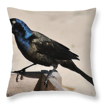 Grackle Chow Down Throw Pillow