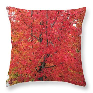 Grand Haven Red Throw Pillow